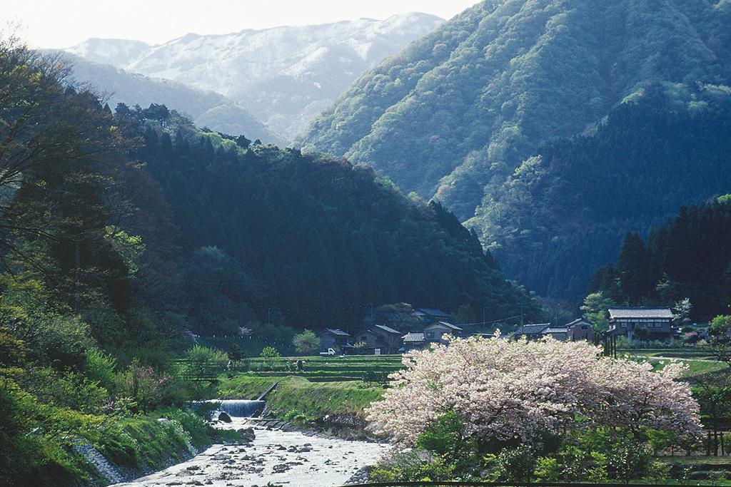 sasagawa10